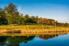 Riflessioni degli alberi nel lago druid, al parco della collina del druido in Baltim Immagine Stock Libera da Diritti