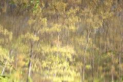Riflessioni degli alberi nell'acqua del lago Immagine Stock