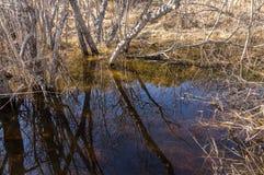 Riflessioni dei rami di albero nell'acqua Fotografie Stock