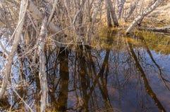 Riflessioni dei rami di albero nell'acqua Immagine Stock