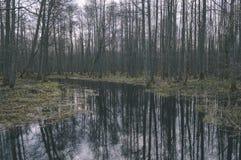 riflessioni dei tronchi di albero in stagno sporco in autunno - fil d'annata fotografie stock libere da diritti