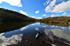 riflessioni del tipo di Mirrow sul lago Dobson Immagine Stock