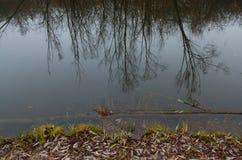 Riflessioni dell'acqua degli alberi Fotografia Stock