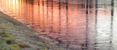 Riflessioni dell'albero in acqua di congelamento fotografia stock