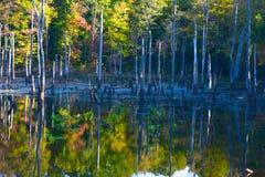 Riflessioni dell'autunno Fotografie Stock Libere da Diritti