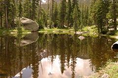 Riflessioni della foresta Fotografie Stock