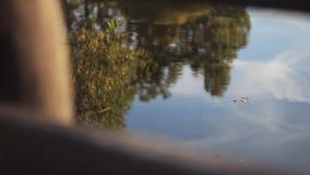 Riflessioni della foresta in acqua calma Autumn Time stock footage