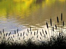 Riflessioni di autunno Fotografia Stock Libera da Diritti