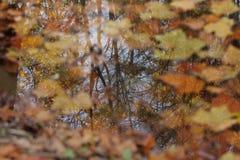 Riflessioni di autunno in acqua Immagine Stock