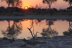 Riflessioni di Okavango Immagini Stock