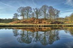 Riflessioni di un bosco ceduo degli alberi in Elterwater fotografia stock