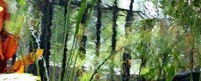 Riflessioni di uno stagno del giglio Fotografia Stock