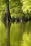 Riflessioni di verde verde smeraldo Immagine Stock Libera da Diritti