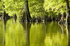 Riflessioni di verde verde smeraldo Immagini Stock Libere da Diritti