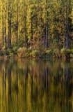 Riflessioni laterali del lago Immagini Stock