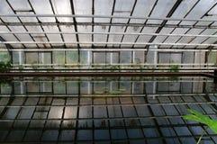 Riflessioni nell'acqua Immagine Stock