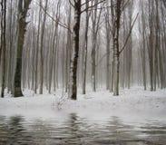 Riflessioni nella foresta durante l'inverno Immagini Stock Libere da Diritti
