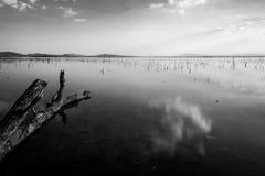 Riflessioni perfette delle nuvole e del cielo su un lago, con un tronco di albero Immagini Stock