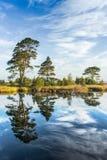 Riflessioni su un lago calmo della palude Immagine Stock