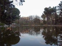 Riflette degli alberi nel lago Fotografia Stock