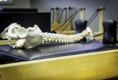 Riformatore Pilates e colonna vertebrale Fotografia Stock Libera da Diritti