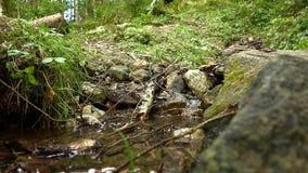 Rifornisca il fiume ed il piede della foresta video d archivio