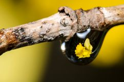 Rifrazione della goccia di acqua Fotografia Stock Libera da Diritti
