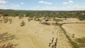 Rift valley tribal leaders walking in African savannah landscape, dry season stock footage