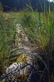 Riftwood och havet gräs tillbaka tänt av ottasolen, Portland är Royaltyfri Fotografi