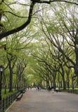 riga alberi Immagine Stock