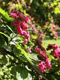 riga Anfang des Sommers Blumen Lizenzfreies Stockfoto