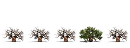 Riga concettuale di alta risoluzione degli alberi del baobab 3D Immagini Stock
