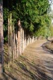 Riga degli alberi Fotografie Stock