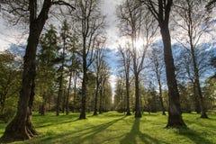 Riga degli alberi Immagini Stock Libere da Diritti