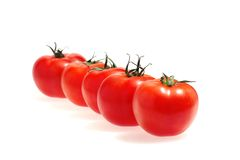 Riga dei pomodori isolati sul bianco immagine stock libera da diritti