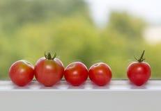 Riga dei pomodori sul davanzale della finestra Fotografie Stock