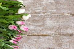 Riga dei tulipani dentellare Fondo del regalo della primavera Immagini Stock