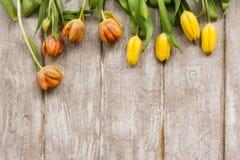 Riga dei tulipani gialli Priorità bassa della sorgente Fotografie Stock Libere da Diritti
