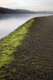 Riga dell'alga lungo lo shor del ciottolo Immagini Stock Libere da Diritti