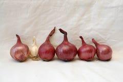 Riga delle cipolle rosse con un piccolo aglio Immagini Stock Libere da Diritti