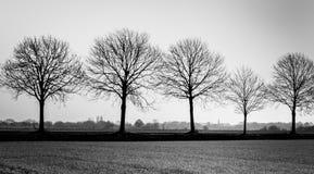 Riga delle siluette nude dell'albero Immagine Stock Libera da Diritti