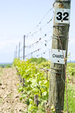 Riga delle viti del Chardonnay immagini stock