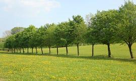 Riga di alberi Fotografia Stock Libera da Diritti