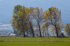 Riga di alberi Fotografie Stock Libere da Diritti