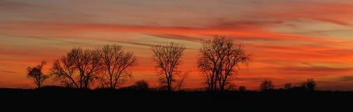 Riga di albero crepuscolare (panoramica) Fotografia Stock