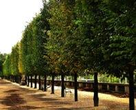 Riga di albero nella sosta Fotografia Stock Libera da Diritti