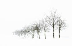 Riga di albero in neve Fotografia Stock