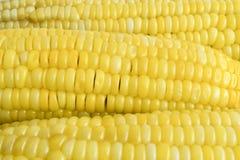Riga di cereale Fotografie Stock