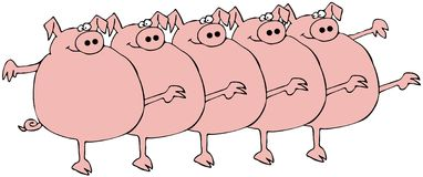 Riga di coro del maiale Fotografia Stock Libera da Diritti