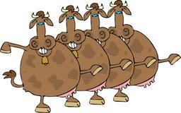 Riga di coro della mucca Fotografia Stock